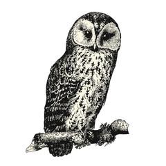 vintage bird engraving / drawing: owl - retro vector design element