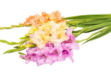 Fototapete - bouquet of gladiolus