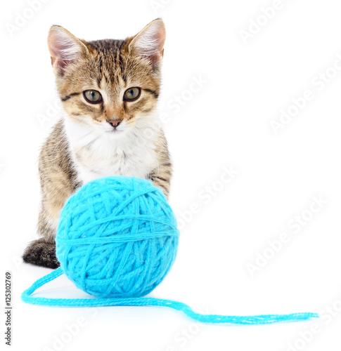 cat litter pet supplies plus