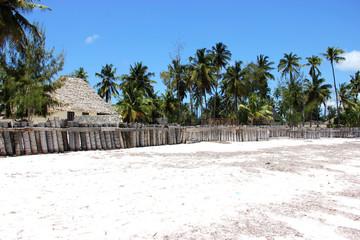 Кокосовые пальмы, остров Занзибар, Танзания.