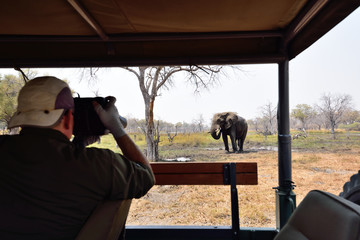 Photographing an elephant while on safari in Africa