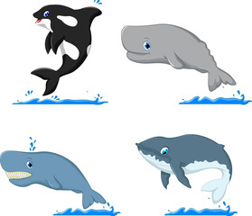 whale cartoon collection for you design