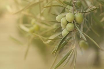 Green olives ripe background
