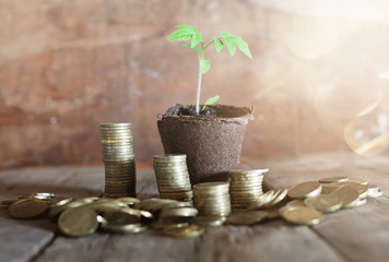 plant with coins on wooden background