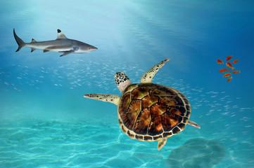Shark and Hawksbill Turtle
