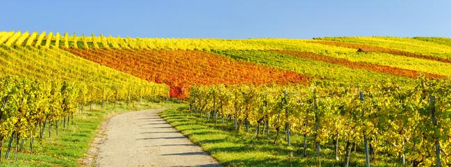 Herbstliches Laub im Weinberg