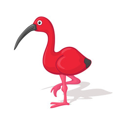 Funny cartoon ibis vector illustration. Animal Zoo concept.