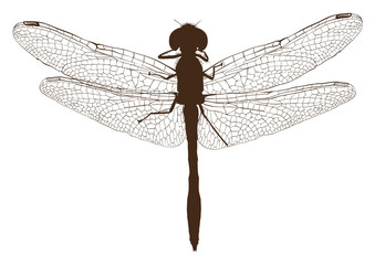 Brown dragonfly silhouette top view