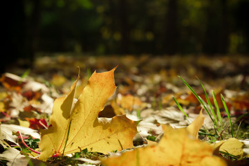 Dramatic sentimental and romantic autumn colors background