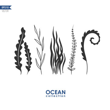 sea plants and seaweed isolated on white, vector oceanic plants