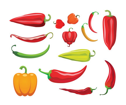 Hot peppers. Different sorts of hot peppers in all colors, shapes and sizes. Chili. Vector illustration.