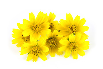 Yellow flowers and white background