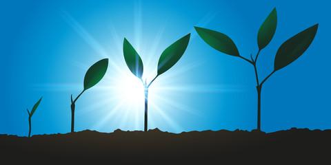 Plante qui pousse - Croissance - Développement