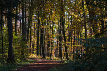 Path in an autumnally forest