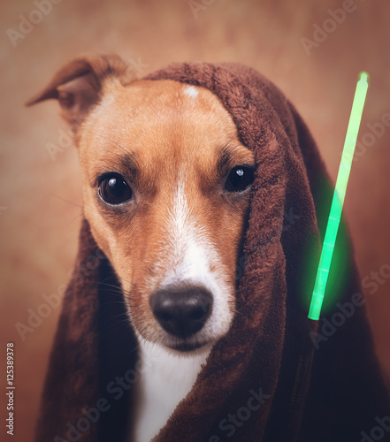star wars jack russel hund m ge die macht stockfotos. Black Bedroom Furniture Sets. Home Design Ideas