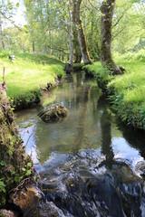 nature ruisseau