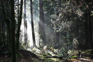Keuken foto achterwand Bos in mist sunlight throw the woods landscape