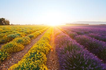 Spoed Fotobehang Lavendel Champ de lavande et d'immortelle