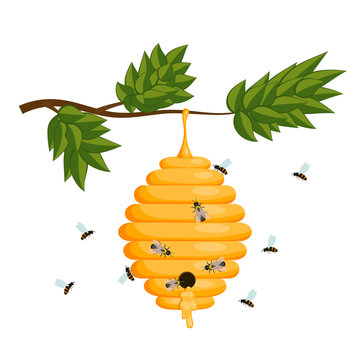 Yellow bee hive on a white background. Bee hive isolate. Stock V