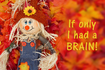 Message from a scarecrow