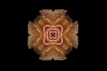 Flower mandala against black background