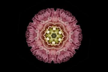 Flower mandala against black background