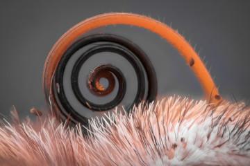 Extreme magnification - Butterfly proboscis, Vanessa Atalanta