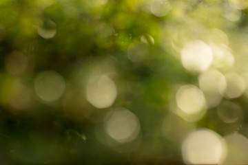 bokeh of tree and lights on green background