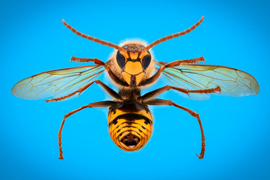 Extreme magnification - Giant Wasp anatomy