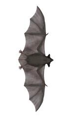 Flying bat - 3D render
