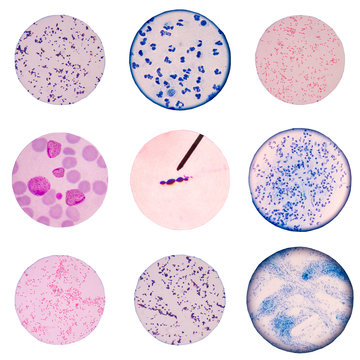 Mix cells on white background.