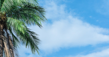 Coconut tree with beautiful sky and bright.