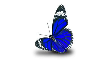 Butterflies, Plain Tiger Butterfly flying up (Danaus chrysippus,beautiful butterflies