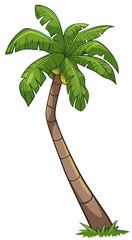 Coconut tree cartoon style