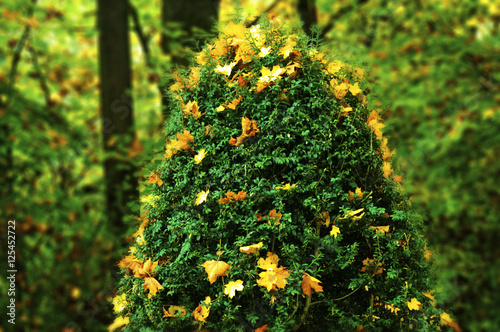 Weihnachtsbaum Mal Anders.Weihnachtsbaum Mal Anders Stock Photo And Royalty Free Images On