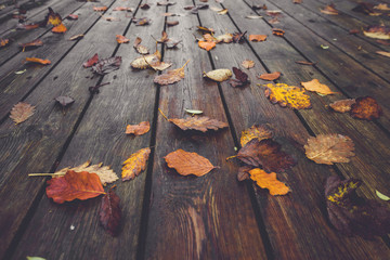 Autumn season with colorful autumn leaves