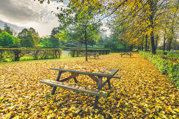 Autumn leaves on a bench in a park