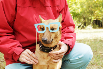 Old, smiling woman holding paper glasses on stick close to dog's muzzle. Dog in funny, fake glasses with ownerin park.