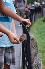 Fütterung eines Eichhörnchens