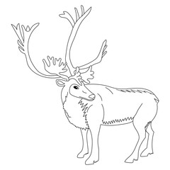 Hand Drawn Reindeer. Sketch Cute Deer Isolated on White. Vector Illustration.
