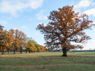 Scenic view of a oak landscape in autumn at sunset