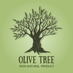 Hand drawn graphic olive tree. Vector illustration. Olive tree logo design used for advertising olives, olive oil, natural olive products premium quality.