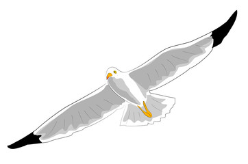 fliegende moewe