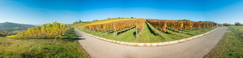 Panorama Weinberg mit Reben im Herbst