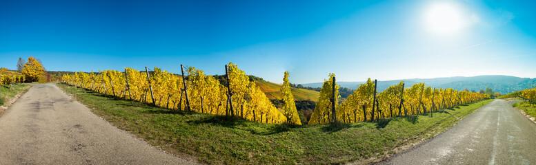 Fototapete - Panorama Weinberg im Herbst mit gelben Laubhttps://de.fotolia.com/Contributor/Indexing