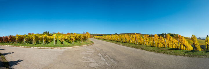 Fototapete - Panorama Weinberg im Herbst mit Laub gelb