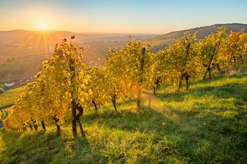 Fototapete - Malerischer Sonnenuntergang im Herbst im Weinberg