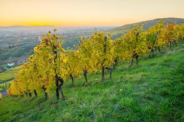 Fototapete - Dämmerung am Abend im Weinberg im Herbst