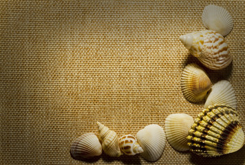 Sea shells on background of burlap