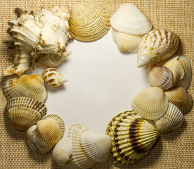Sea shells on sack with white background